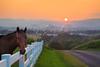 Horse at Sunset near Dayton in the Shenandoah Valley of Virginia, USA