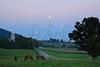 Horses Grazing at Moonrise near Dayton in the Shenandoah Valley of Virginia, USA