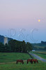 Horses Grazing at Moonrise near Dayton in the Shenandoah Valley of Virginia, USA