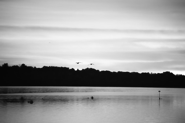 Two Geese fly north over Onadaga Lake.