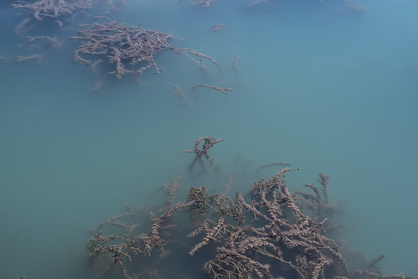 Water plants on a mountain lake of turquoise water in Kyrgyzstan