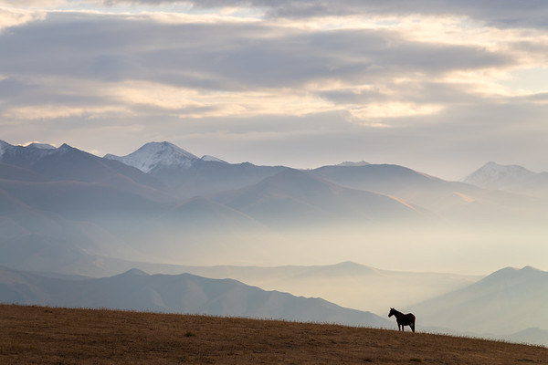 Local farming horse on a misty morning in Kyrgyzstan