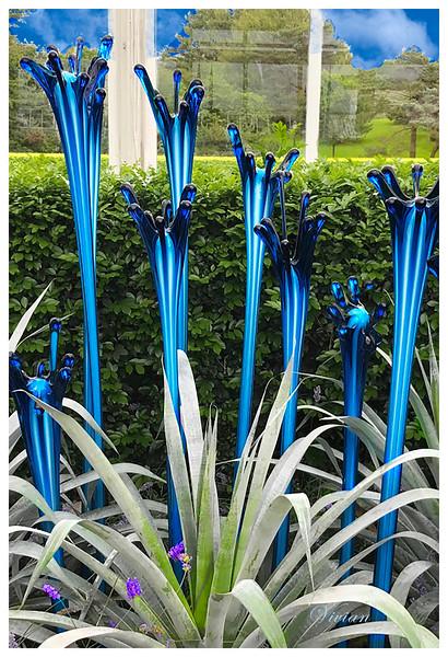 VIVIANS BLUE TRUMPETS REV01B 13X19
