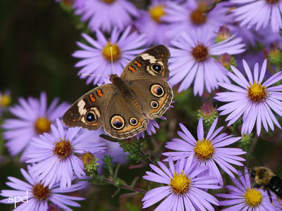 Native Plants, Bees & Butterflies