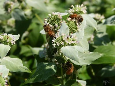 Native Plants, Bees & Butterflies