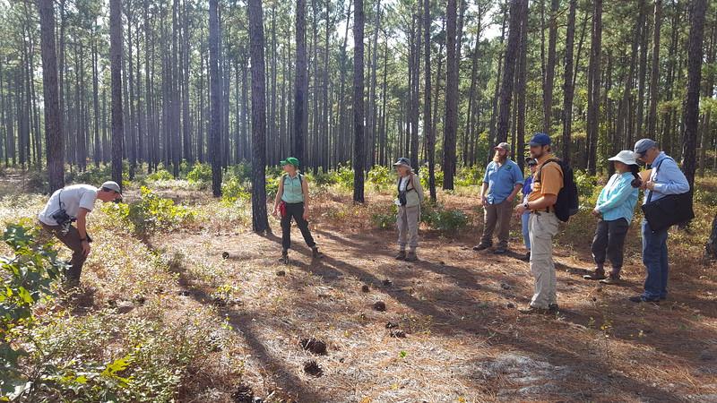 Zuni Pine Barrens