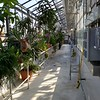 W&M Greenhouse