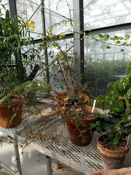 W&M Greenhouse