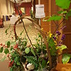 Native Plant Arrangement