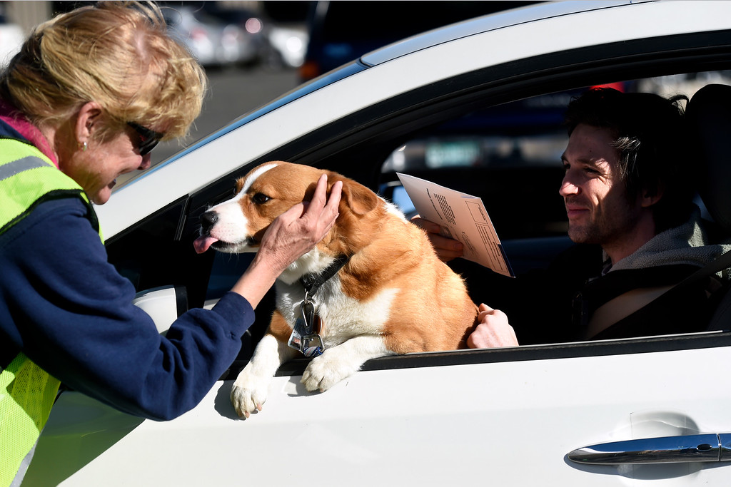 ". BEST 1. BOULDER, CO - NOVEMBER 5, 2018: Boulder County Elections worker Fran Cronin gets a kiss from ""Teemo\"" the dog as his owner Colin Brennan, of Boulder, at right, drops of his ballot on Monday outside of the Boulder County Clerk and Recorder\'s Office in Boulder. For more photos of people voting go to dailycamera.com (Photo by Jeremy Papasso/Staff Photographer)"