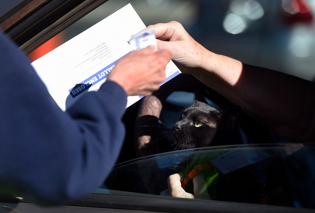 . BOULDER, CO - NOVEMBER 5, 2018: A cat watches from the lap of a driver as they drop off their voting ballot on Monday outside of the Boulder County Clerk and Recorder\'s Office in Boulder. For more photos of people voting go to dailycamera.com (Photo by Jeremy Papasso/Staff Photographer)