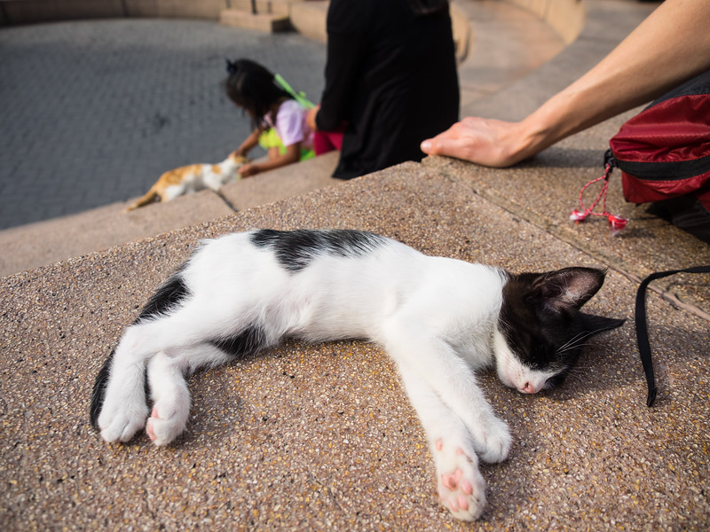 This City Square is is called Parque Kennedy.  But I call it the Cat Park.  A couple hundred friendly cats roam the park.  The city cares for their health, and keeps population in check with spay and neutering.  This little kitten was not much bigger than my hand.