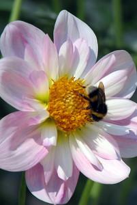 Bee in Park