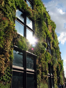 Plants growing on the exterior of the building - very cool