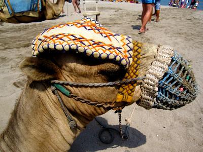 Camel Burka