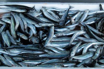 fishies