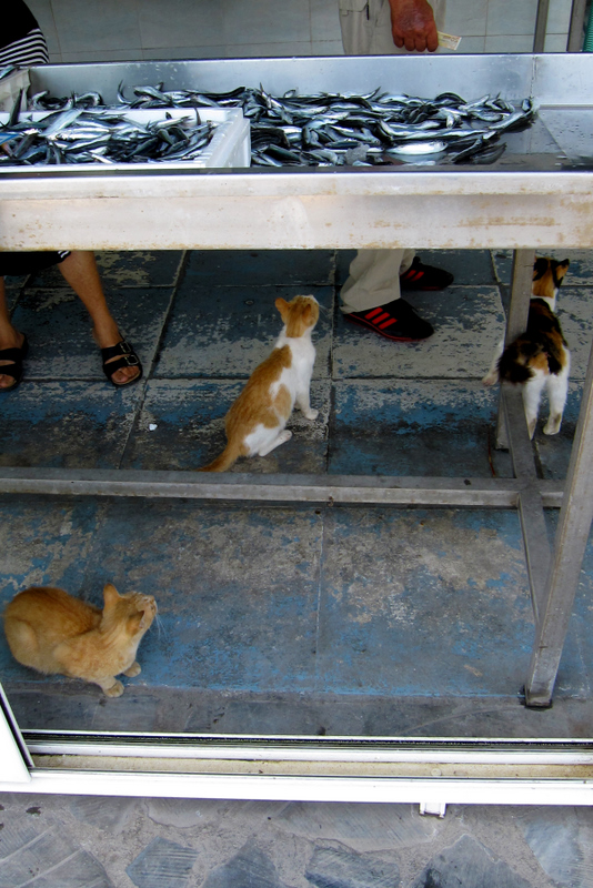 Cats at Fish Market - waiting for something to get dropped