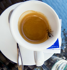 A bee looking for some caffeine