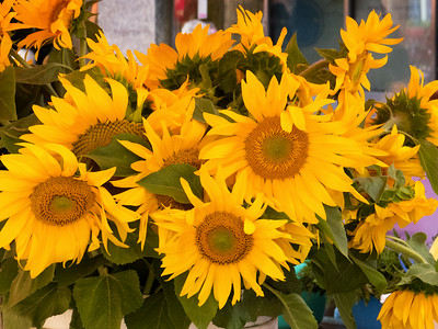 Flowers from the market or Dolac