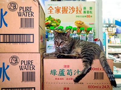 Guard cat.