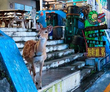 A  pet deer!