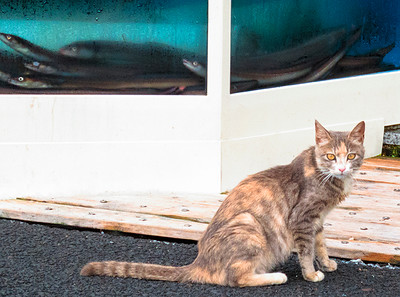 kitty looking for fish