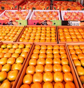 Famous citrus fruits of Jeju