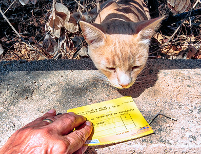 Train Station Cat inspects my train ticket