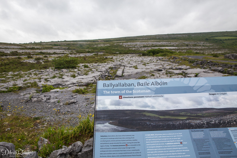 The Burren-refers to the landscape being covered in limestone and vegetation growing up around the stones.