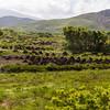 Peat farm