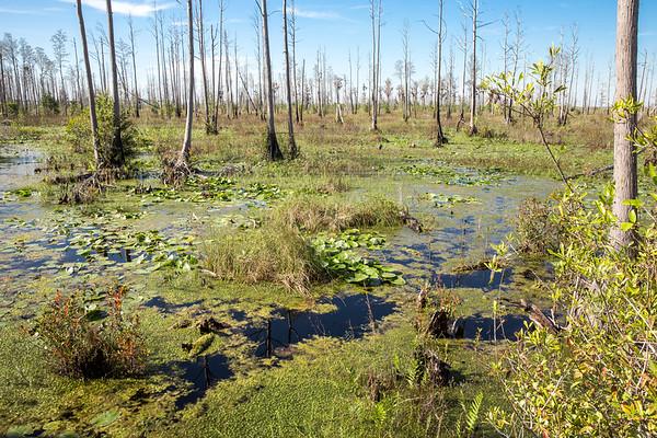 Okefenokee Swamp