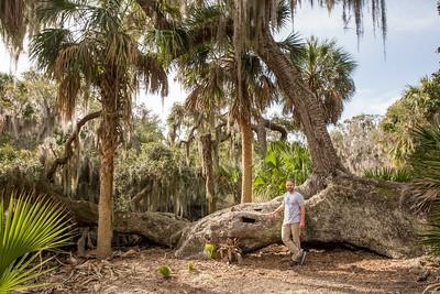 Treasure Oak