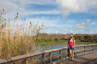 Anhinga Trail, Royal Palm