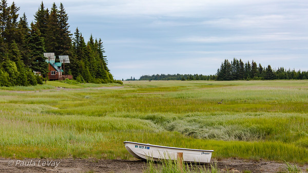 This broad meadow stretches for a couple of miles from our lodge, and is the site of many bear encounters, as they move out of the forest in search of food. The boat near our ATV path shows how high the tide can get. The beach is to the right of the distant trees.