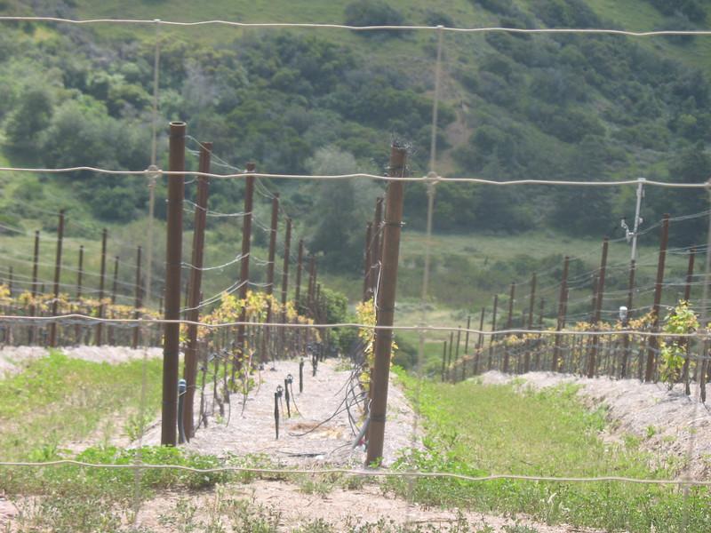 Vineyard at El Rancho Escondido.