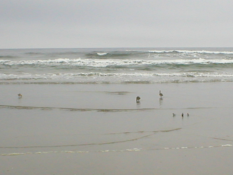 Shorebirds, breaking waves