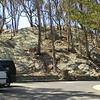 Summit near Morro Bay Natural History Museum, where we took the preceding shots. Next Stop -- Black Hill.