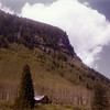 Aspen trees behind a mountain cabin.