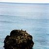Rock near Waimea Bay.