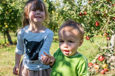 A day at the orchard picking apples
