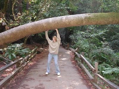 san francisco muir woods 3 sarah holding up tree