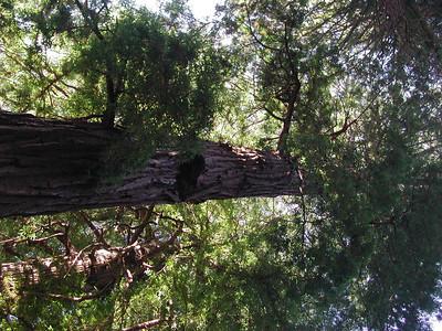 san francisco muir woods 2
