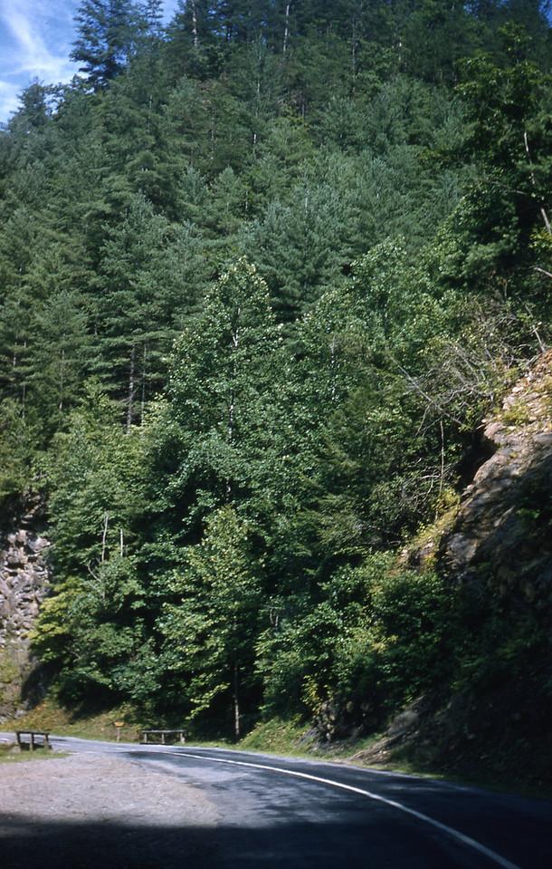 Through the Great Smoky Mountains.
