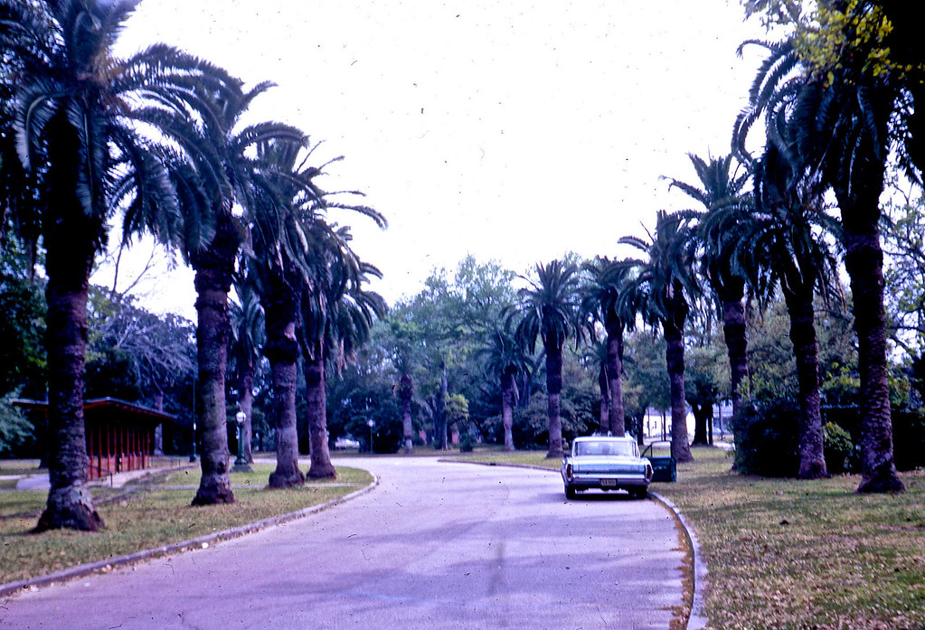 Palm Trees in City Park - New Orleans.