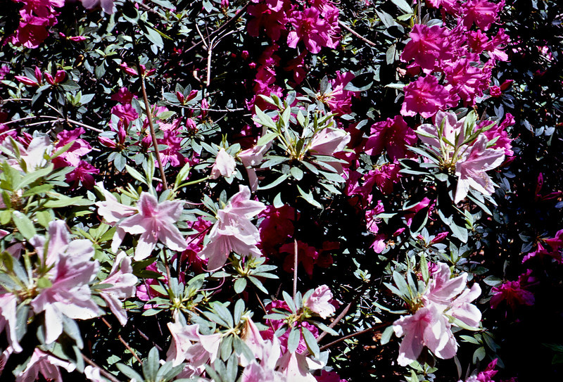 Josie's Yard in Gautier, MS.  An older woman offered tours of her antebellum home.  She did this so she could pay her taxes.  The yard was beautiful.  This is a shot of part of her yard.