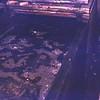 11 - 20 - Fish market