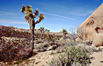 1988 April: Joshua Tree National Park, CA