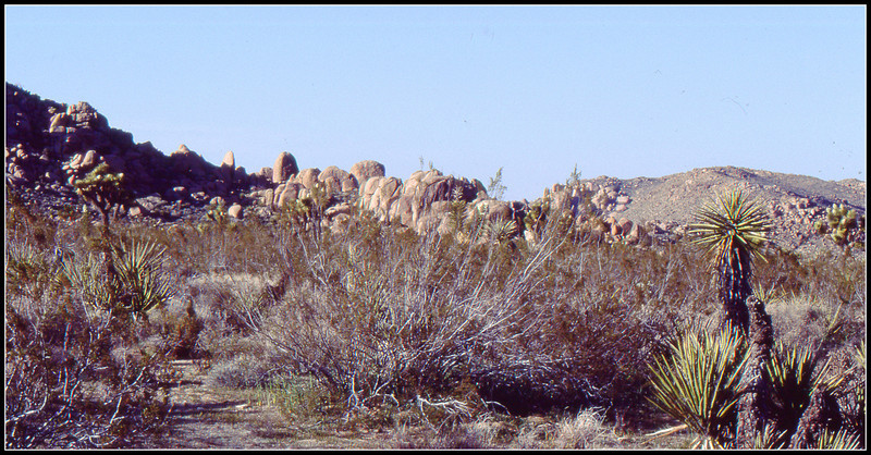Not only does the park have unique plant life but the area is also known for various geologic structures.