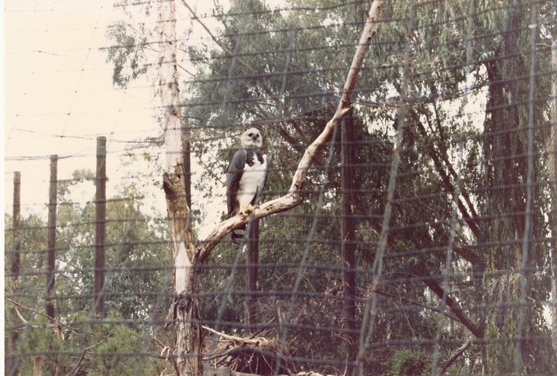 1990 San Diego (79)