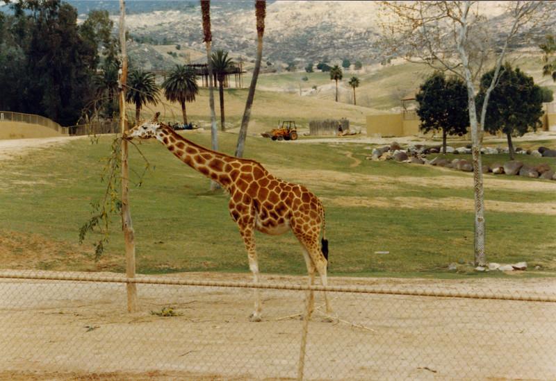 1990 San Diego (75)